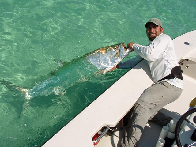 Ami outfitters fly fishing for Fishing anna maria island